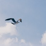 Provocations #1: Who Shot the Albatross?