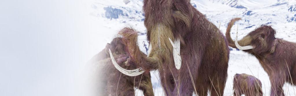 news-banner-r-mammoth