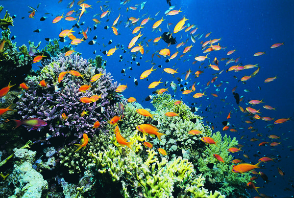 marineecosystem