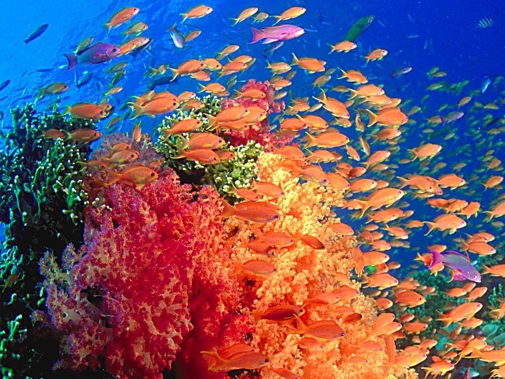 Marine-Life-sea-life-7591152-1024-768