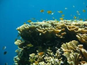 fishhabitat