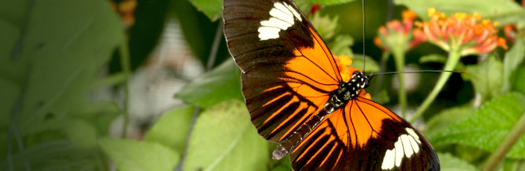 news-banner-r-butterfly-wings