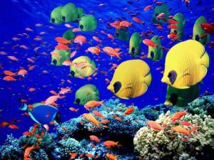 Sea_Coral_Reef__Fish_Wallpaper_o76pu