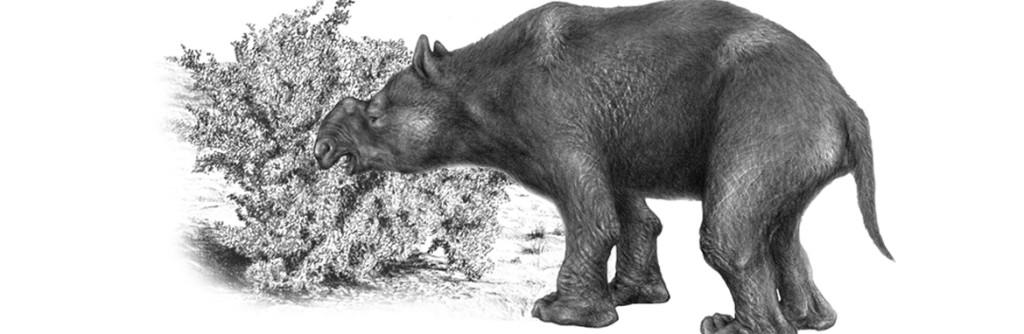 news-banner-r-megafauna-extinction