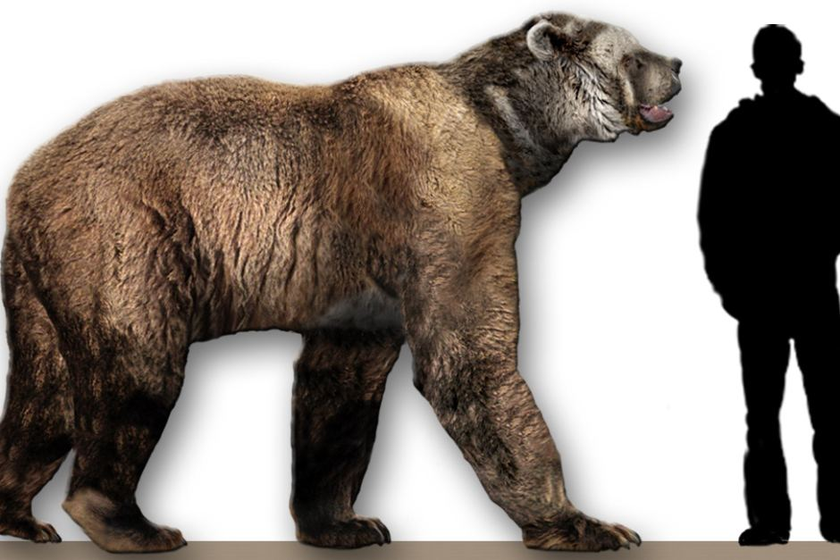 The big bears weighed over a tonne and were as tall as a human when on all fours. (Dantheman9758/Wikimedia)