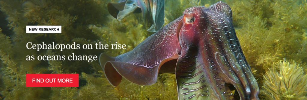 hp-banner-r-squids-rise