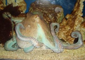 Octopus-768x539