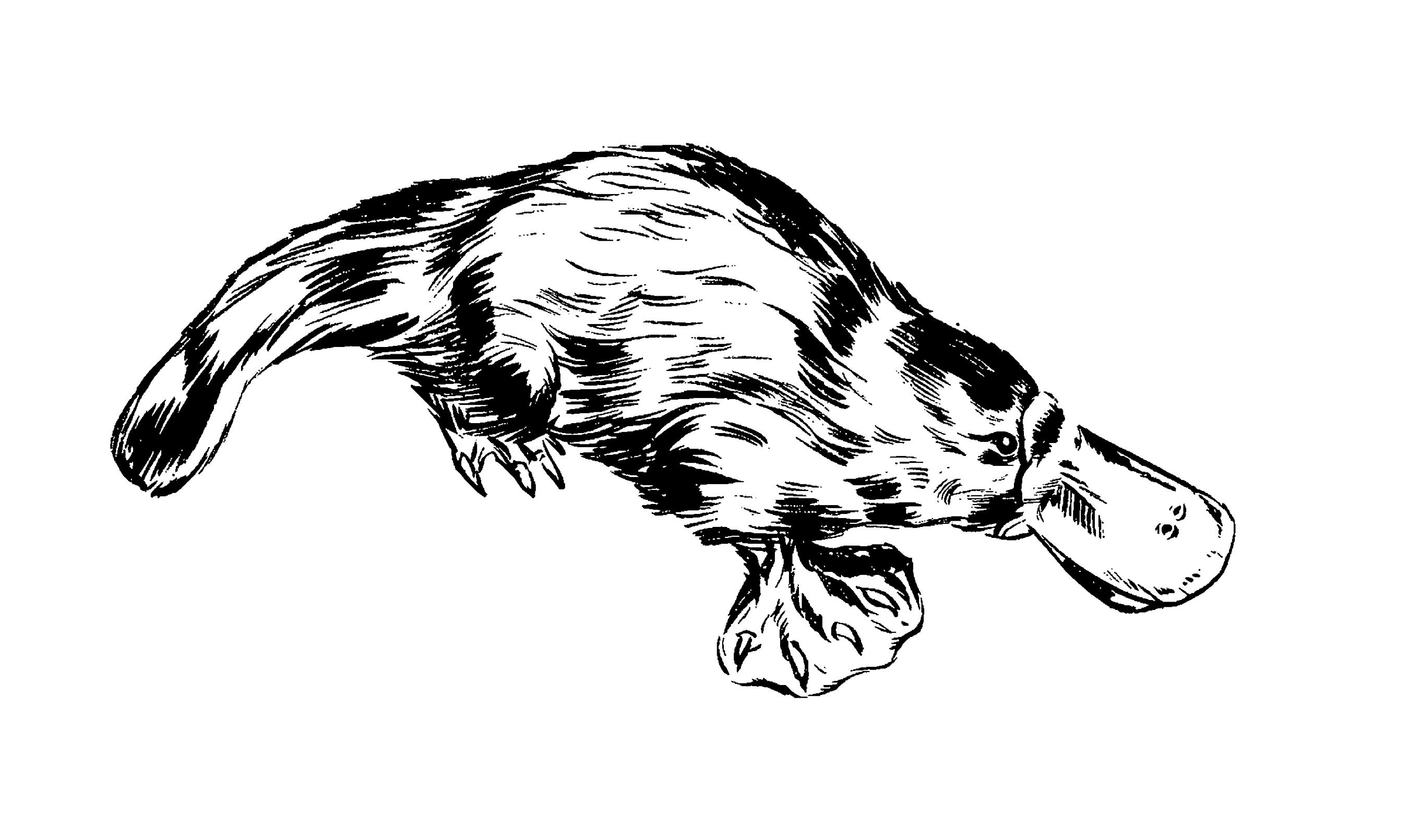 Platypus Venom