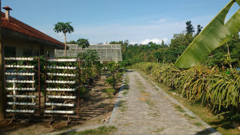 UGM Farm