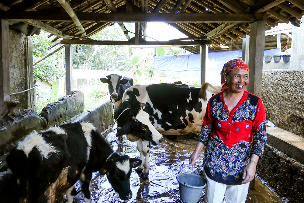 Helping Indonesian dairy farmers prosper