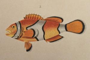 seventh_fish_2