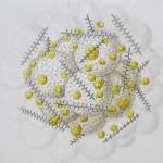 sphaerozoum-spinulosum-2