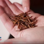 edibleinsects